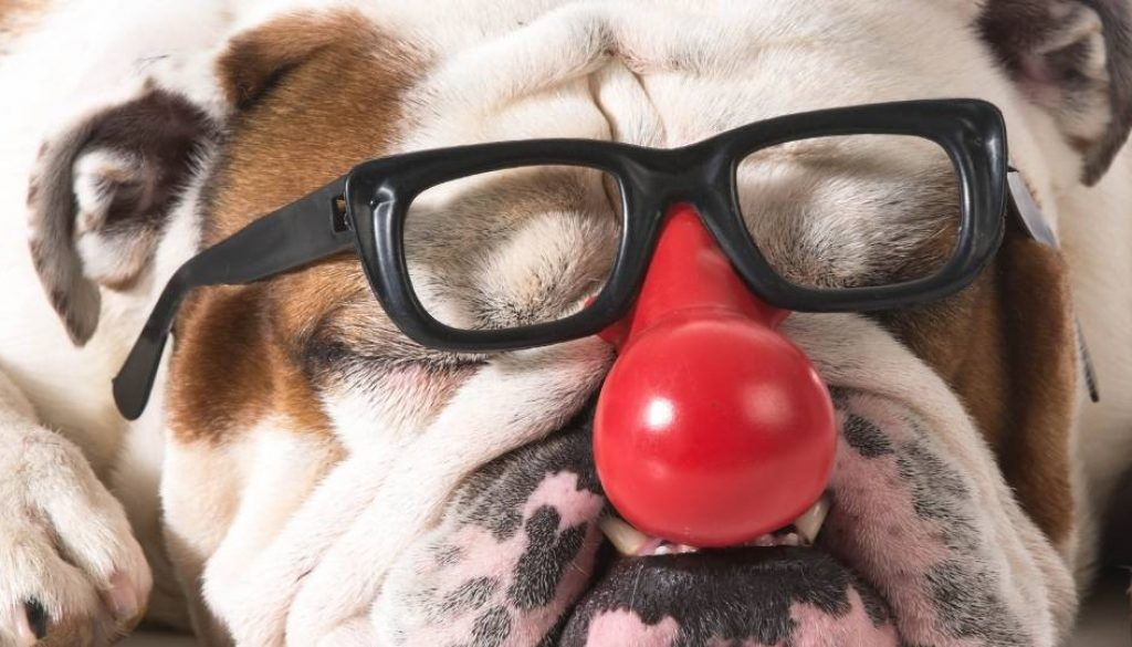 the-gift-comedy-by-canadas-keynote-humourist-doggie-red-nose